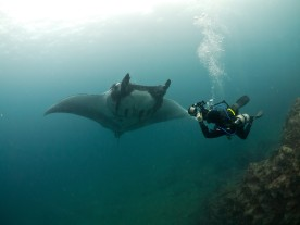 Photographing manta rays in Ecuador