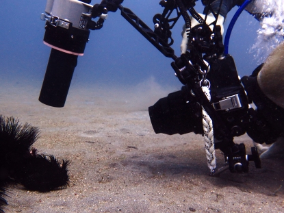 Luke in action, find the black frogfish