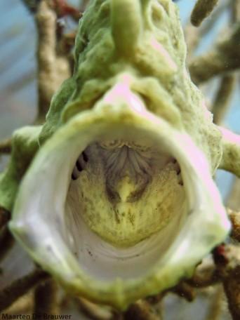 Froggie yawn