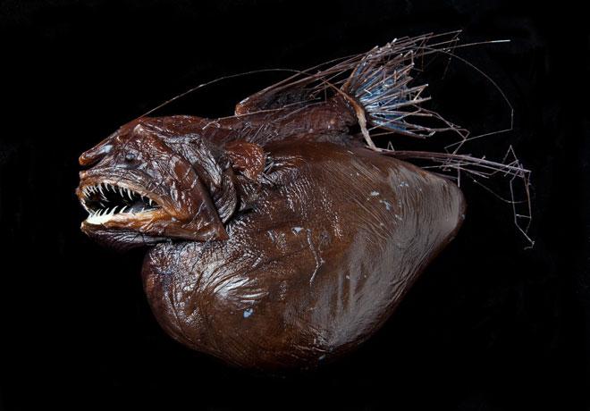 anglerfish-007-300713