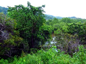 Mangrove view