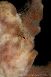 photo 4 - longlure frogfish