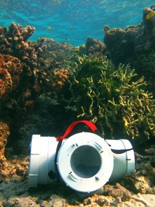 Sentinel trap reef