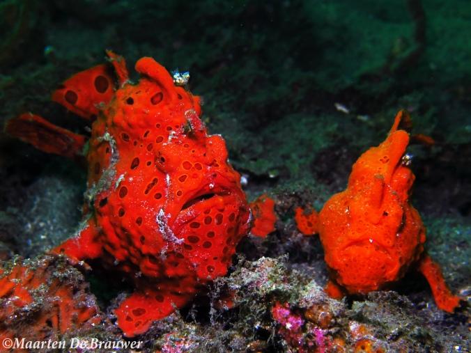 Froggie pair_MDB