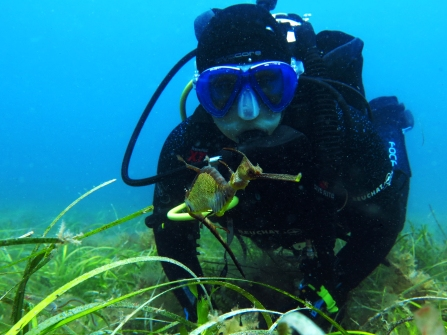 Tanika and a Weedy seadragon