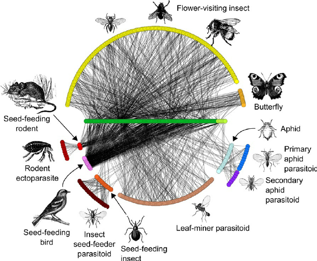 Species-interaction-networks-at-Norwood-Farm-Somerset-UK-revised-from-Pocock-et-al