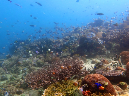 Counting and identifying the fish on a reef can be a challenge