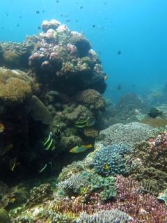 Coral reef near Nusa Laut