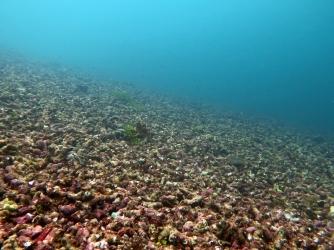 Dynamited reef, now a rubble field